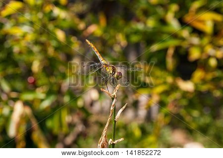Dragonfly On A Background Of Green Grass Sitting On A Branch