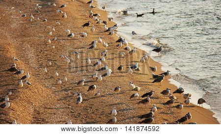 Many seagulls resting on sandy seashore, wilderness