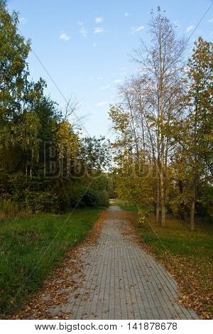 Path Strewn With Leaves In The Park
