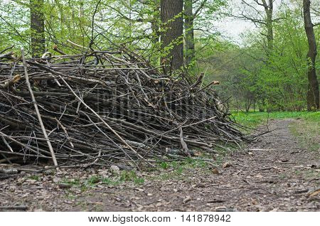 Heap Of Firewood In Forest At Summer Day