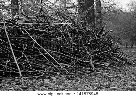 Firewood In Forest At Summer Day Black And White