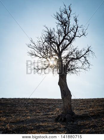 Lonely tree on the hill and afternoon sun rays passing through the bare branches