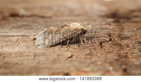 Fuzzy Lepidoptera