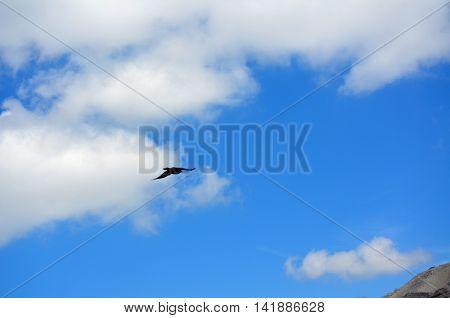 Flying black Crow between heaven and earth