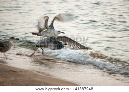 Seagulls flying away motion blur shot, selective focus, instagram film color filter effect
