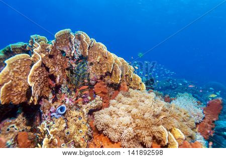 Colorful Tropical Reef Landscape
