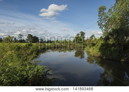 Pond And Native Trees And Plants Surviving Surrounded By Farmland And Rice Fields.