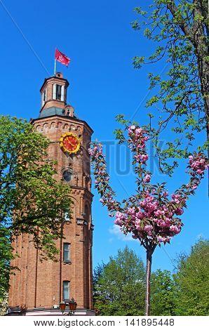 Old fire tower with clock (1911) and sakura tree in the spring, Vinnytsia, Ukraine