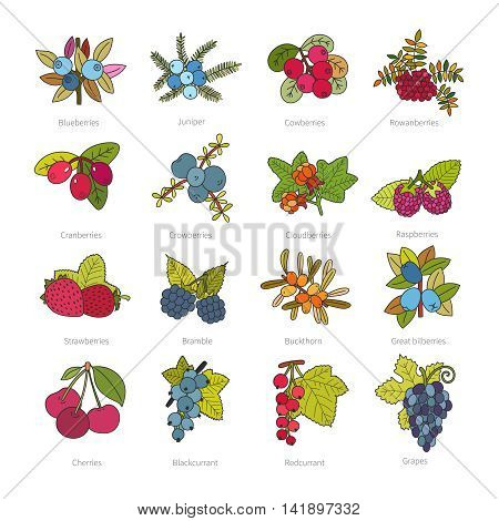 Set Of Vector Doodle Pied Berries Isolated On White