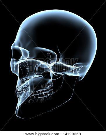 Human Skull - X-ray Oblique Projection