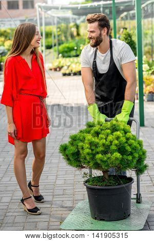 Handsome flower seller helping female buyer to take out a tree with trolley from the plant store. Customer service and delivery in the flowers shop