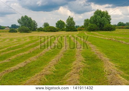 Summer landscape with rows of mown hay on a water-meadow in Poltavskaya oblast Ukraine