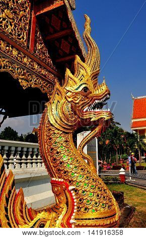 Chiang Mai Thailand - January 3 2013: A large gilded Naga dragon with fierce rows of white teeth stands in front of the Ubosot Sanctuary Hall at Wat Phra Singh *