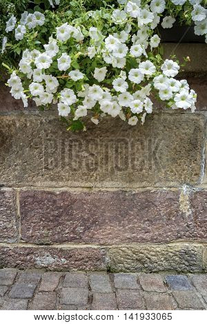 Brick wall with hanging flowers. Abstract background.