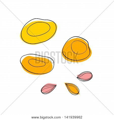 Vector set Dried apricots and apricot seeds