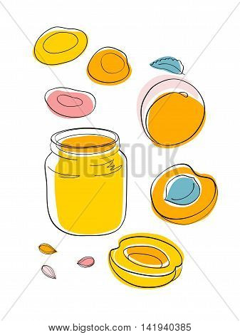 Vector sketch Apricot jam and dried apricots