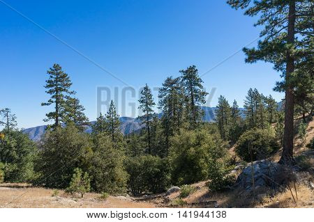 Valley Meadow In Angeles Forest