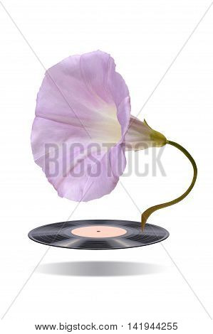 Gramophone record and flower-bell in the form of a gramophone on a white background