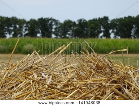 Head of haystack on the agriculture mowed field after harvesting stock image
