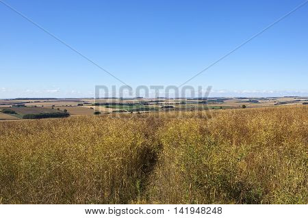 a ripening canola crop with views of patchwork fields in summer under a blue sky