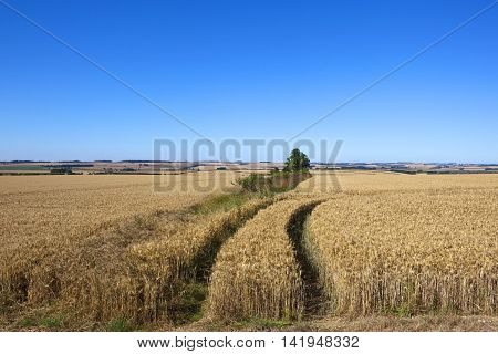 a golden wheat landscape with tyre tracks and patchwork fields under a blue sky in the yorkshire wolds