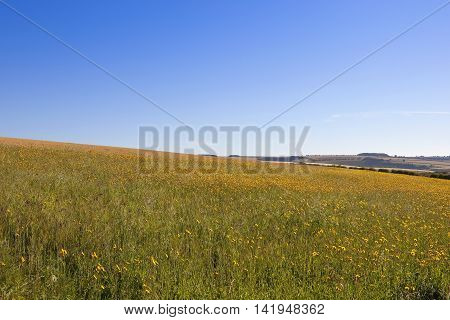 a scenic wildflower meadow with patchwork fields under a blue sky in the yorkshire wolds in summer