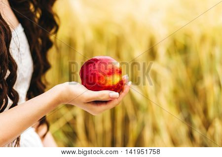 young woman holding bunch of red apples in her hand in the garden field