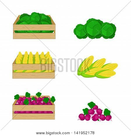 Vegetables in wooden boxes isolated on white background. Cabbage, corn and radishes. Organic food illustration. Fresh vegetables from the farm.