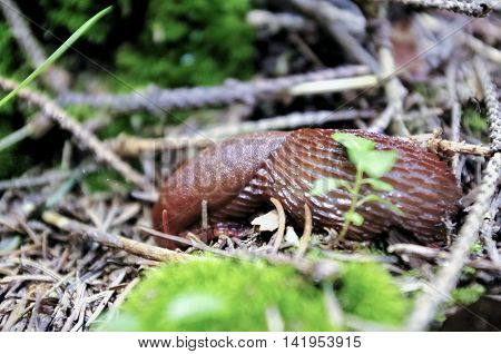 image of slug creeping on the ground