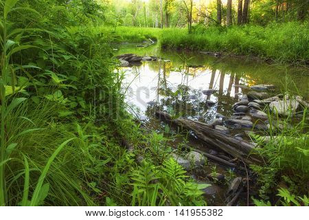 Swamp located in the back of the Bozenkill Nature Preserve