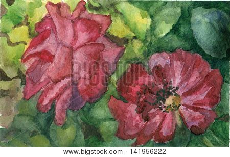 Watercolor hand drawn two roses on green leaves background