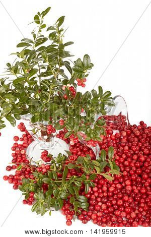 Fresh cowberry with green leaves on a white background