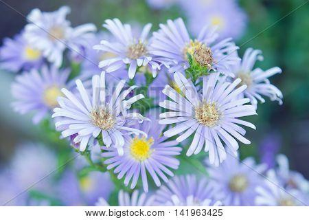 Beautiful Gerbera Flower In The Garden, Gerbera Is The Beautiful Flower For Wedding Decoration