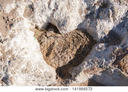 Closeup of coastal limestone rock with natural love heart shaped formations with sand in Western Australia.