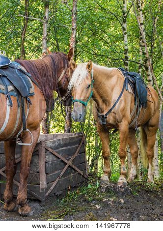 Two horses stand side by side at a feeding trough