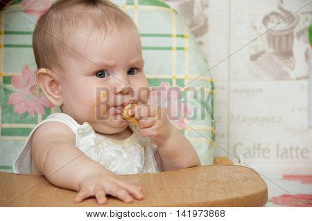 Little child girl sits in a highchair in the kitchen and eats cookies