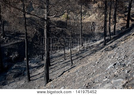 Forest and trees burned after a big forest fire which created a big environmental damage at Troodos mountains in Cyprus.