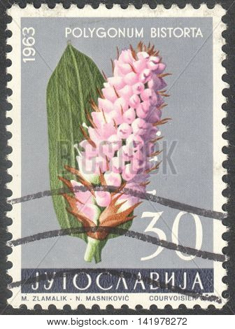 MOSCOW RUSSIA - CIRCA MAY 2016: a post stamp printed in YUGOSLAVIA shows a Polygonum bistorta flower the series