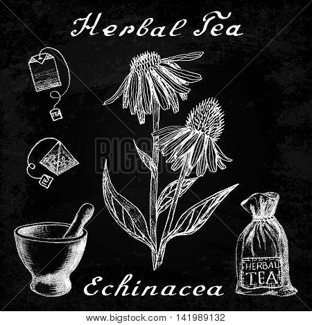 Echinacea hand drawn sketch botanical illustration. Vector drawing. Herbal tea elements - tea bag bag mortar and pestle. Medical herbs. Lettering in English languages. Effect chalk board