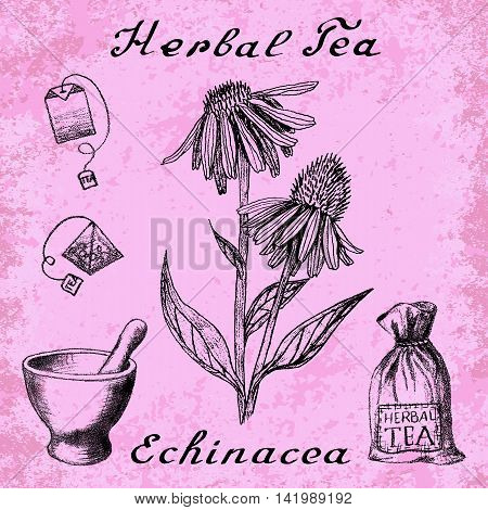 Echinacea hand drawn sketch botanical illustration. Vector drawing. Herbal tea elements - tea bag bag mortar and pestle. Medical herbs. Lettering in English languages. Grunge background