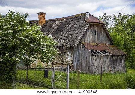 old grey wooden rustic barn and blossomig bush at front