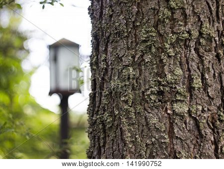 close-up fir trunk with blurry nature background