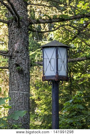 the old rusty lantern at the forest