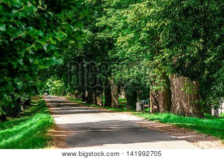 Green Summer Trees In Alley In Countryside