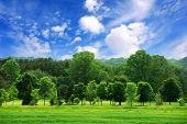 image of blue sky  - Summer landscape of young green forest with bright blue sky - JPG
