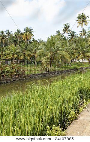 Portrait Landscape Canal Palms Paddy Fields Kerala India