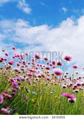 Pink Flowers In A Field