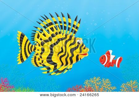 Scorpion-fish and anemonefish