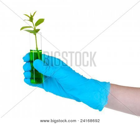 plant in a test tube and hand isolated on white