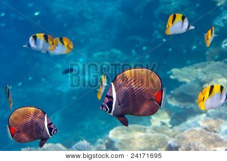 Indian ocean.Fishes in corals.Underwater landscape